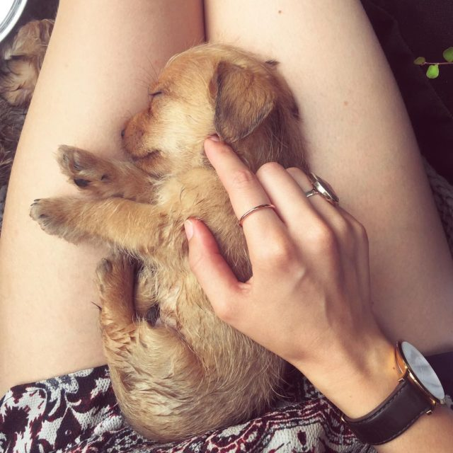 Puppy therapy just what the doctor ordered pupstagram notetoiris nourishyourself