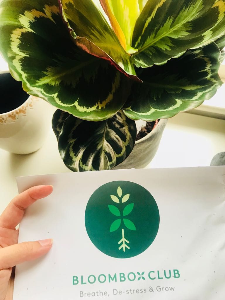 Bloombox Plants Subscription by notetoiris
